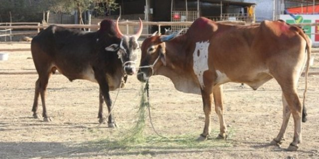 Help Fund The Animal Rahat Tractor Project