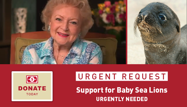 Help Save Baby Sea Lions - Betty White Wildlife Rapid Response Fund