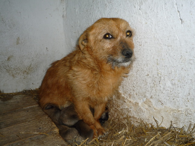 protect the dogs of Har in Romania