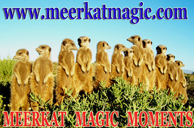Wild and Free meerkat conservation anonymous vote - please vote...