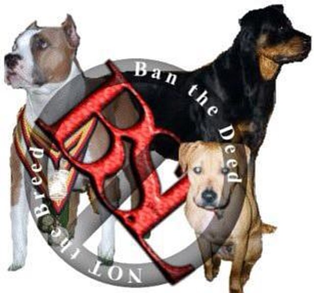 intstitute pit bull owner restrictions in Watertown