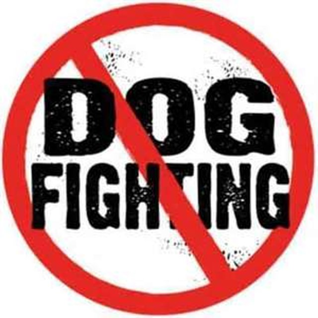 have Facebook remove ALL dog fighting groups
