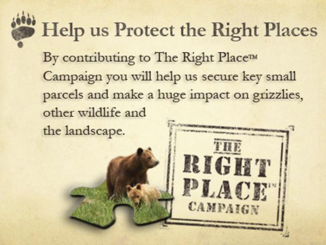 Help Save North America's Wild Grizzlies!