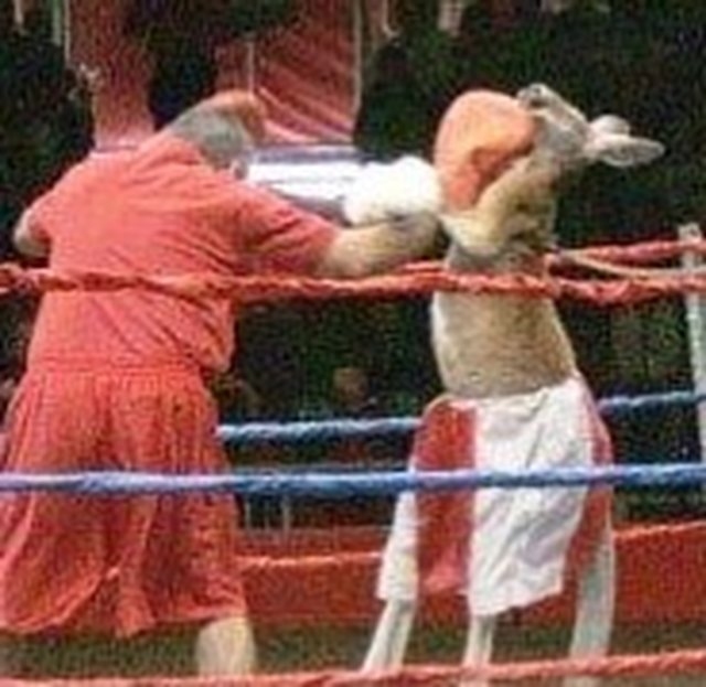 U.S. National Guard, BAN kangaroo boxing acts