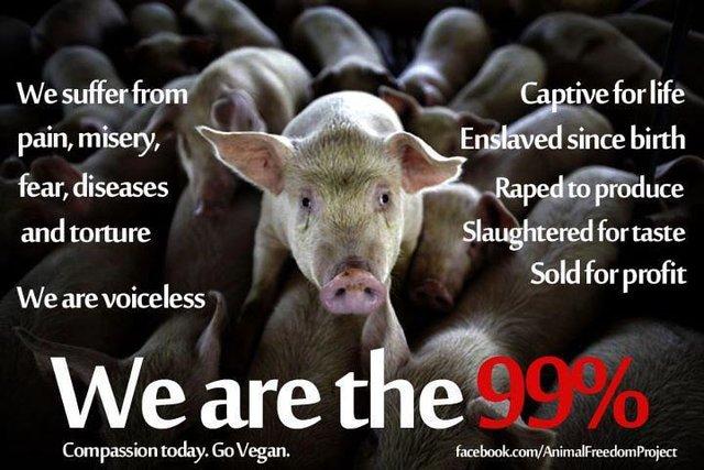 stop glorifying animal abuse on Facebook