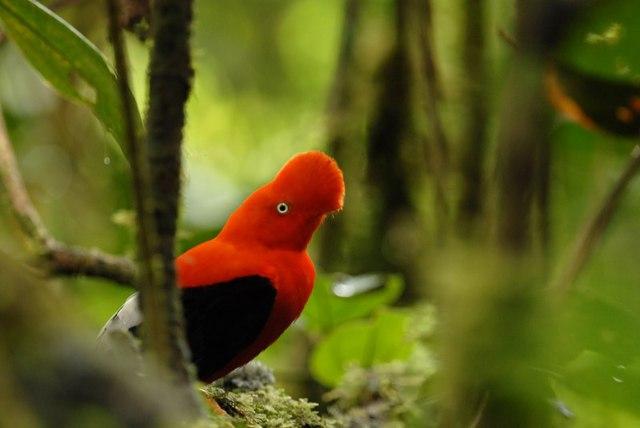 stop deforestation around Peru's Manu National Park