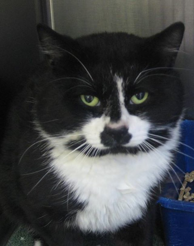 Justice for Oreo the Cat