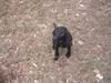 Saving Southern Puppies