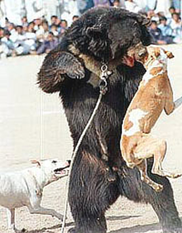 stop bear baiting in South Carolina