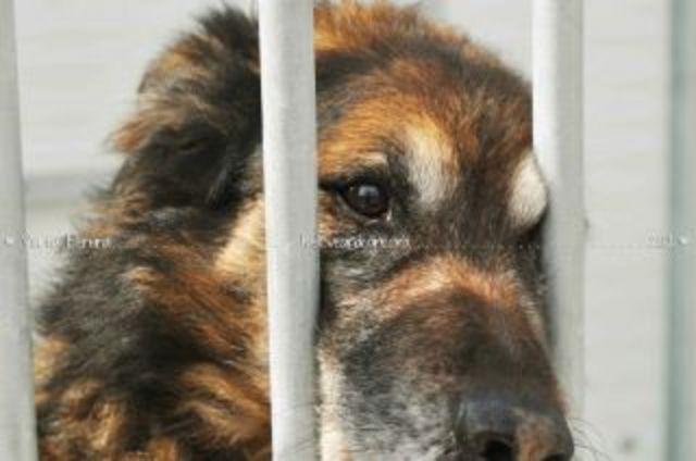 CANIS MUNICIPAIS PASSEM A SER GERIDOS POR ASSOCIAÇÕES DE PROTECÇÃO DE ANIMAIS LOCAIS.