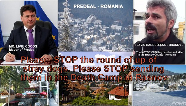 stop the massacre of animals in Romania