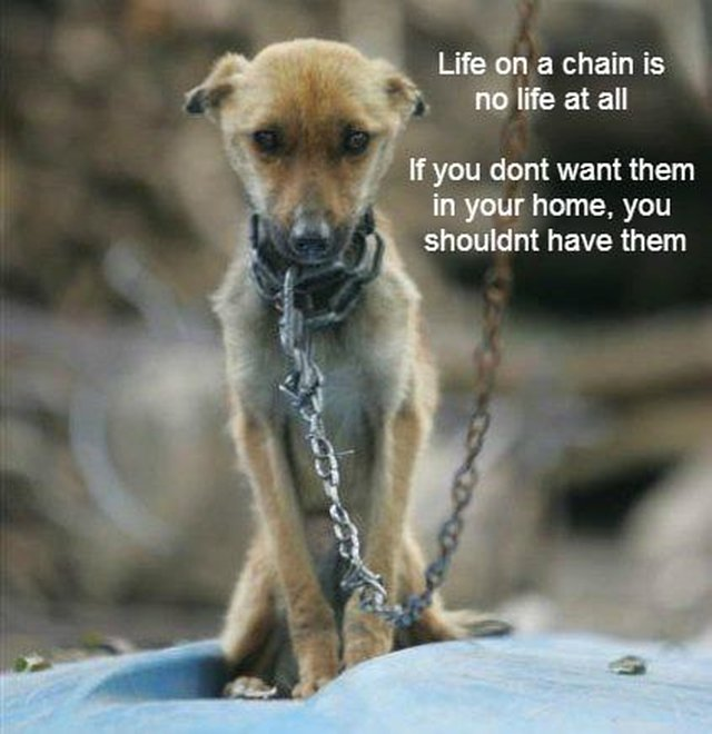 ADOPT DONT SHOP BE A VOICE FOR THE VOICELESS - HUMAN OR ANIMAL THE SUFFERING IS THE SAME,