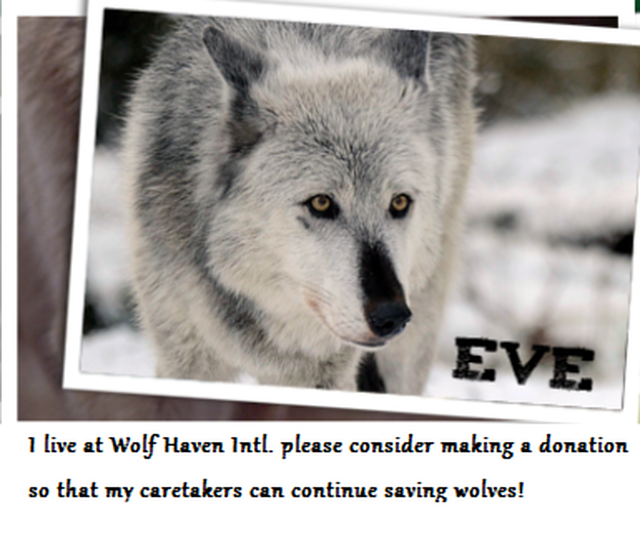 Provide SANCTUARY for Rescued Captive-born Wolves