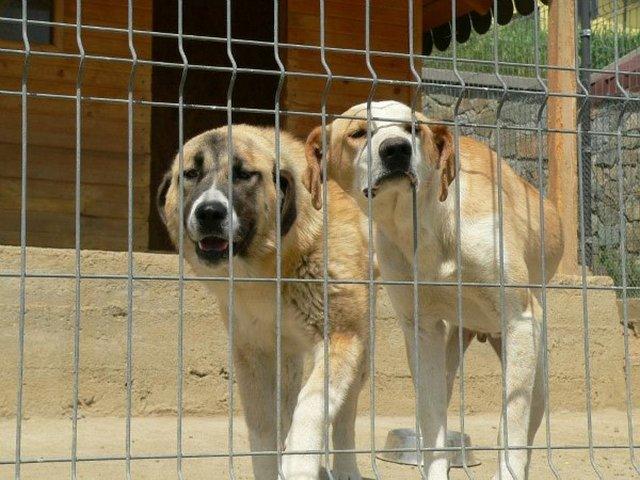 APAM`s animals need FOOD, please help us! PLEASE SHARE