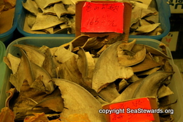 Keep US Shark Fin Regulations Strong