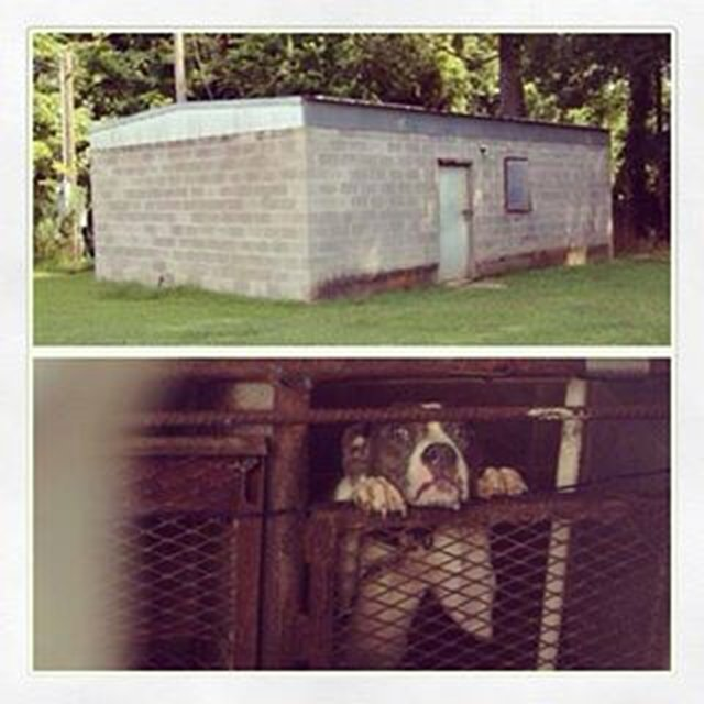 shut down pit bull holding facility in Ellisville, MS