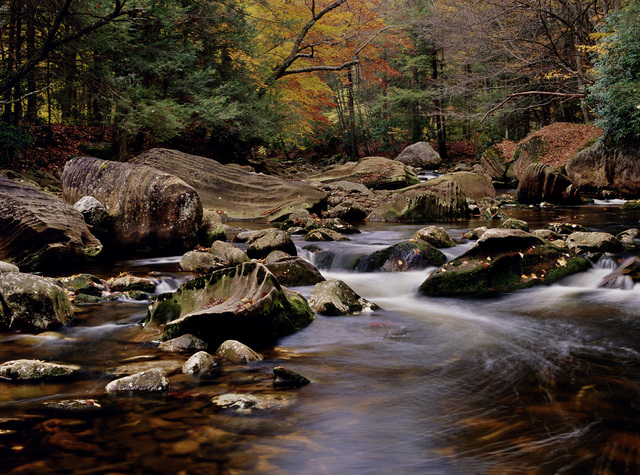 Protect 300 Acres of Forest in the Appalachians