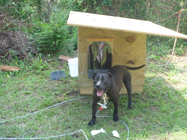 100 Doghouses for 100 Dogs Without Shelter