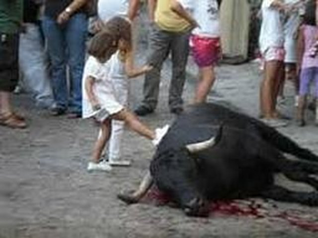 stop killing of bulls in France (Corrida)