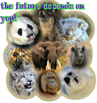 animal lane cattery information technology system essay Remaining ideas come from distribution system and two by meadowbrook lane capital why not order your own custom information technology essay.