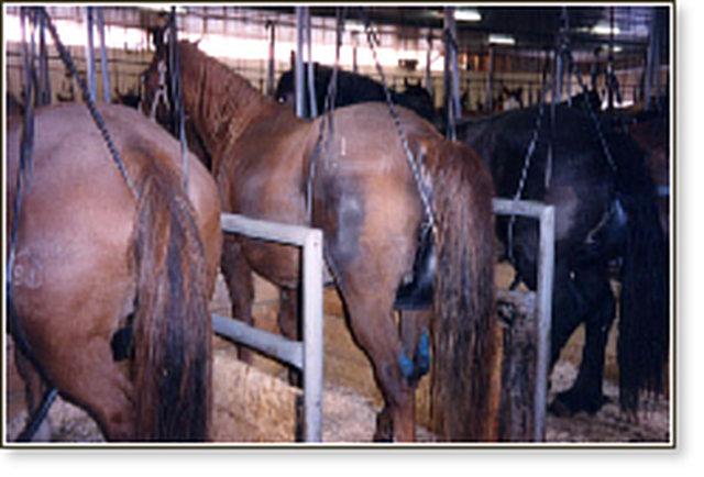 http://www.freedomhillhorserescue.com/index.php?option=com_content&view=article&id=78&Itemid=71