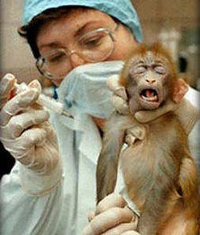 stop using animal tested products