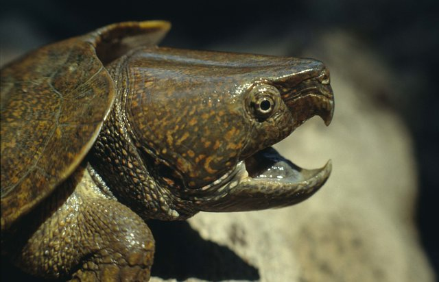 Create a Safe Haven for the World's Rarest Turtles