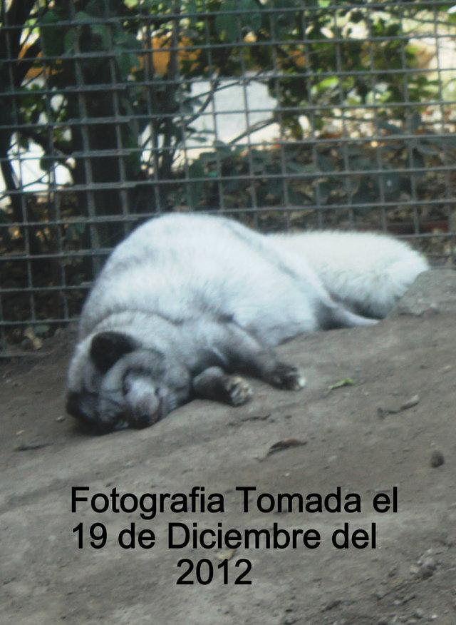 Cambiar la Grave Situación de Maltrato Animal y Descuido de los Zoológicos de la Ciudad de México