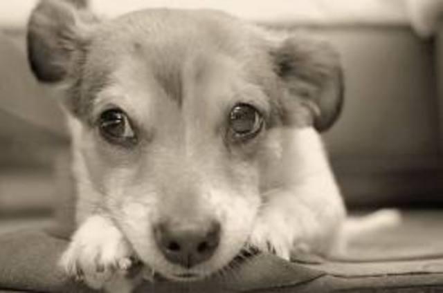 Assina a petição pelo fim dos abates e más condições nos canis municipais