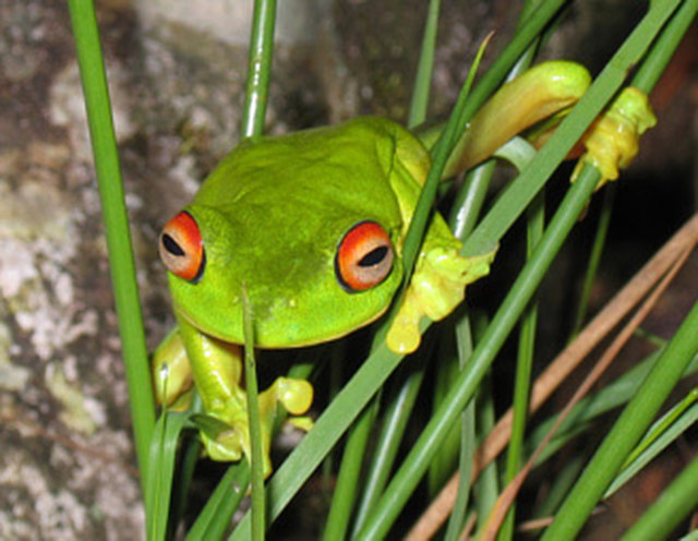 save frogs by banning harmful pesticide Atrazine
