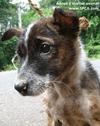 Support the SPCA International