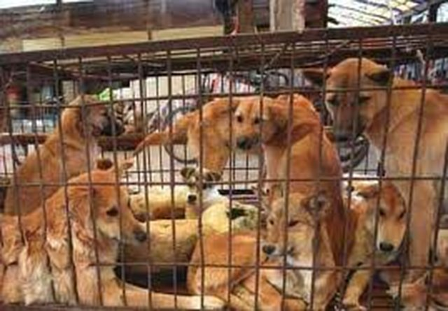 Stop dog meat festivals in China.