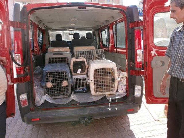 raise awareness about Craiova Spayathon
