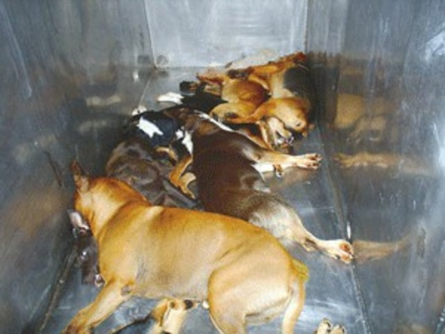 Stop Gas Chamber Euthanizing of Shelter Animals in WV