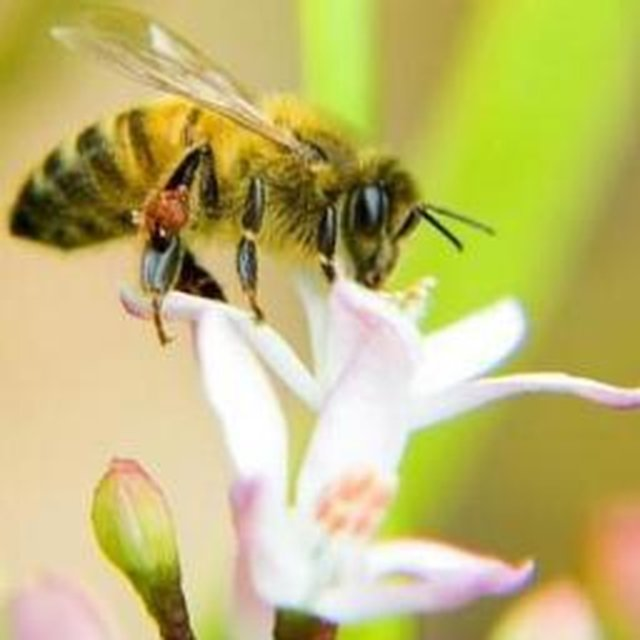 Protect bee populations in the UK by banning neonicotinoid insecticides.