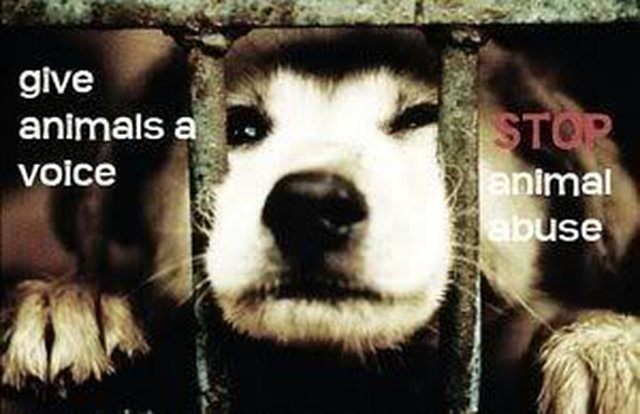 make the government stop animal cruelty