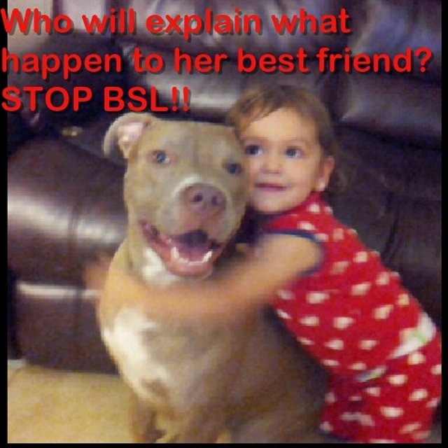 AGAINST the enactment of a BSL in Broward County Florida