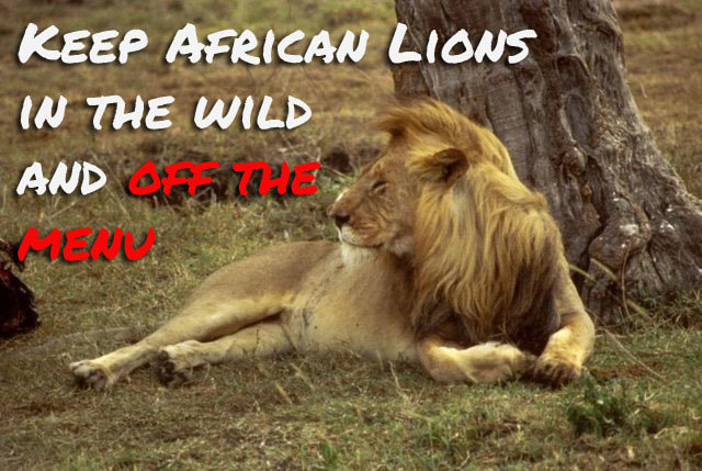 Take lion meat off the menu! Protect African lions.