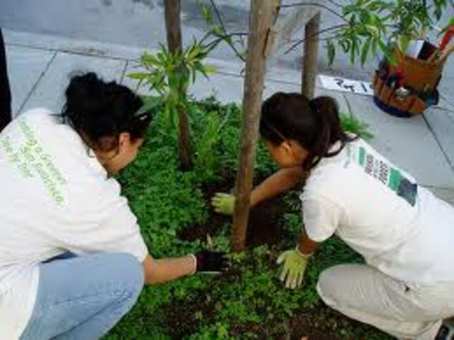 Support a tree planting today!