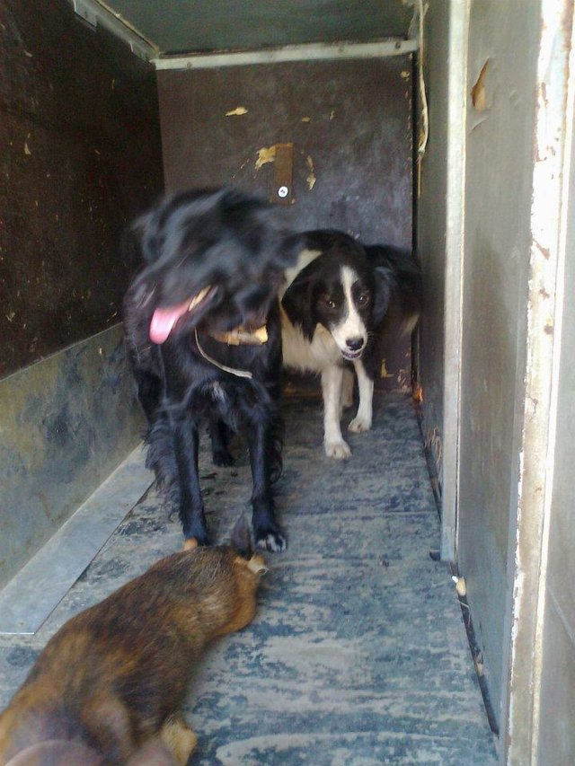 save dogs at the JKP 'Nas Dom' Death Camp in Pozega, Serbia