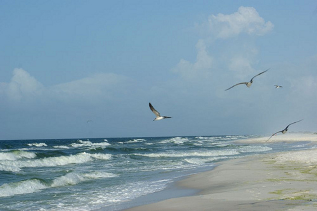 Support the Fund for Gulf Coast Restoration