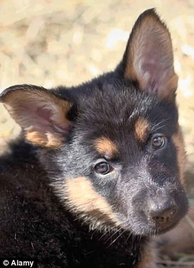 Prosecute and Jail-  Marcus Curry over the killing of his German Shepherd puppy.