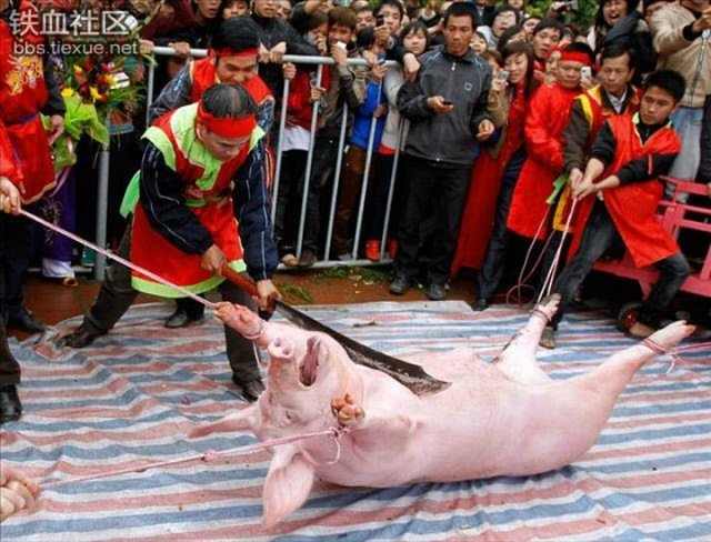 Pig brutally chopped in two in Vietnam: STOP NOW!