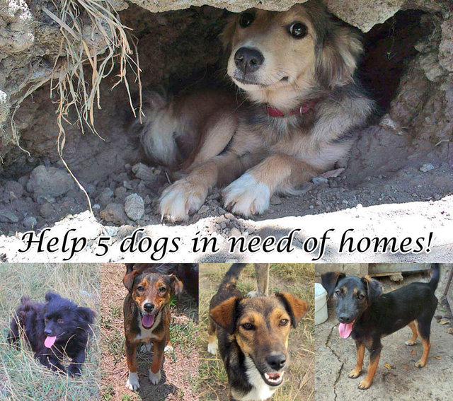 Help 3 Sisters in Need of Homes