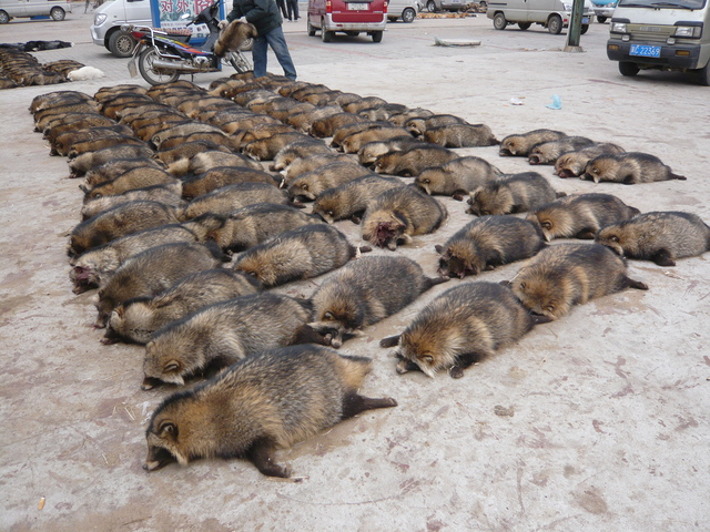 Help End the Bloody Fur Trade