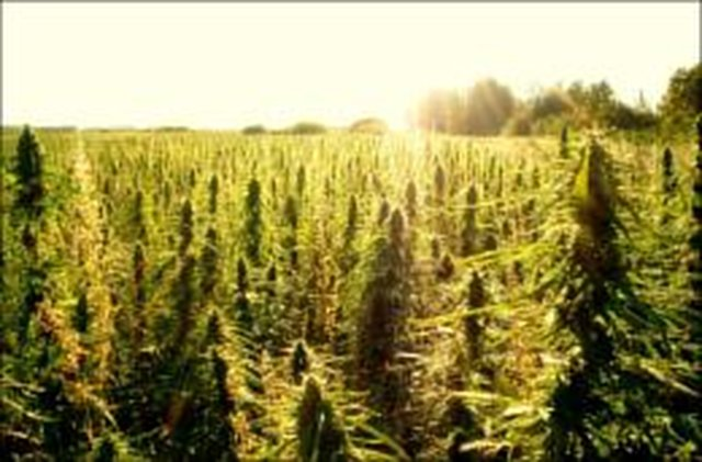 Industrial Hemp Farming Act of 2013