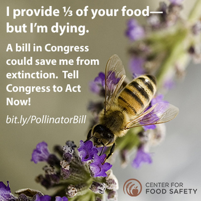 Tell Congress to Suspend Bee-Toxic Pesticides