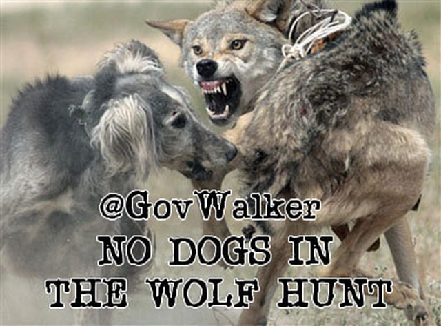 Tweet Wisconsin Gov- NO DOGS IN WISCONSIN WOLF HUNT