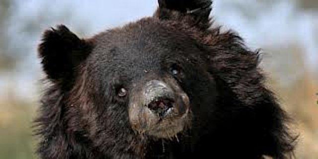 stop bear baiting in South Carolina