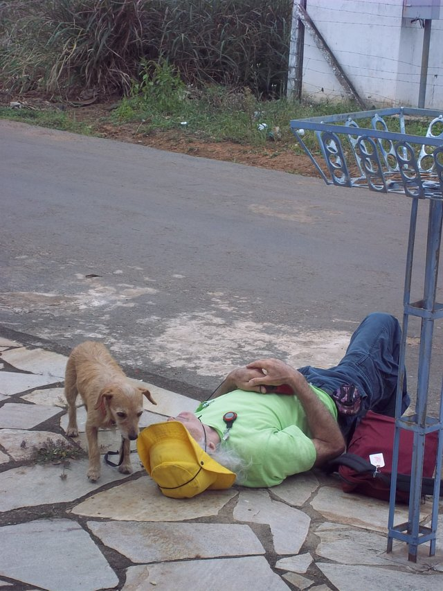 TIMELY: Save the Street Dogs and Cats of Brazil from euthanization